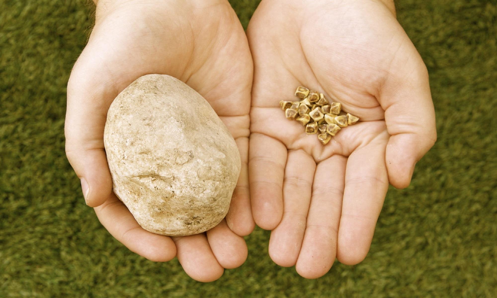 Travyanoe-lechenie-dlya-rastvoreniya-zhelchnyh-kamnej